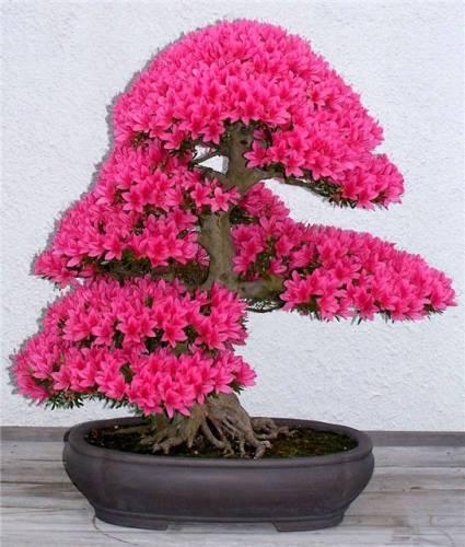 Фото самые красивые цветы в горшках и